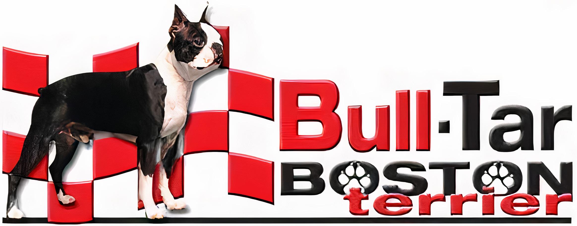 Bull-Tar